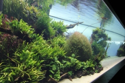 Forests under water, special exhibit